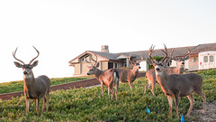 Sunset - August 31st (10 of 19) (Quentin Biles) Tags: ca california cybershot pacificgrove rx100 rx100vii sony buck deer sunset