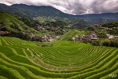 Rice Terrace of Longji (mzagerp) Tags: chine china yunnan gangxi sichuan beijing nature travel voyage travels voyages asia asie