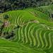Rice Terrace of Longji