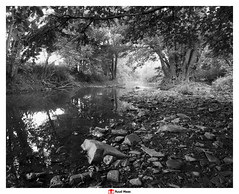 Berwinne (creek) at Dalhem (Belgium) (Ruud Maas) Tags: belgium berwinne blackandwhite dalhem fujineopanacros100 nature creek flowingwater greenleaves hiking landscape stones stream summer sunnymorning trails tree trees water woodland