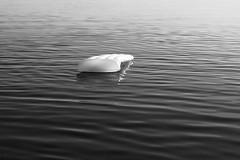 Afloat / Наплаву (Boris Kukushkin) Tags: water bw airmattrass whitelake belarus arsat f14 tp 50mm чб надувнойматрас арсат вода