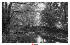 Berwinne (creek) at Dalhem (Belgium) (Ruud Maas) Tags: belgium berwinne blackandwhite dalhem fujineopanacros100 nature creek flowingwater greenleaves hiking landscape smallwaterfall stones stream summer sunnymorning trails tree trees water woodland