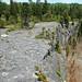 Columbus Limestone (Middle Devonian; North Side Quarry, Kelleys Island, Lake Erie, Ohio, USA) 19