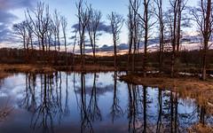Winter reflection (FVillalpando) Tags: water reflection sunset pond trees landscape winter ngysa