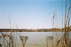 Töreki (szmenazsófi) Tags: smenasymbol lomo smena analog analogue film 35mm outdoor nature lake pond stég tó láp töreki balaton hungary magyarország lakebalaton wetland