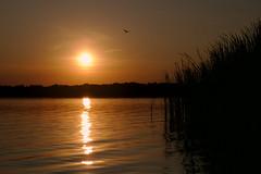 Sunset at the White Lake / Закат на Белом озере (Boris Kukushkin) Tags: sunset landscape lake yellow white belarusian nature belarus golden silhouette bird закат пейзаж озеро желтый белое беларусь белорусская природа золотой arsat 50mm f14 арсат