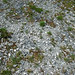 Columbus Limestone (Middle Devonian; North Side Quarry, Kelleys Island, Lake Erie, Ohio, USA) 16