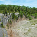 Columbus Limestone (Middle Devonian; North Side Quarry, Kelleys Island, Lake Erie, Ohio, USA) 18