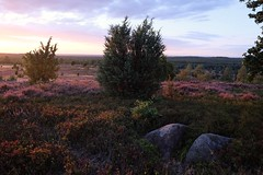 Dreamscape (=Я|Rod=) Tags: lüneburgerheide xh1 wilsederberg sunset heather blooming