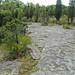 Columbus Limestone (Middle Devonian; North Side Quarry, Kelleys Island, Lake Erie, Ohio, USA) 27