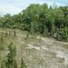 Columbus Limestone (Middle Devonian; North Side Quarry, Kelleys Island, Lake Erie, Ohio, USA) 22