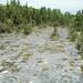 Columbus Limestone (Middle Devonian; North Side Quarry, Kelleys Island, Lake Erie, Ohio, USA) 23