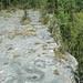 Columbus Limestone (Middle Devonian; North Side Quarry, Kelleys Island, Lake Erie, Ohio, USA) 25