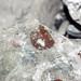 Brachiopods in limestone (Columbus Limestone, Middle Devonian; North Side Quarry, Kelleys Island, Lake Erie, Ohio, USA) 5