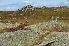 Aubrac (Yvan LEMEUR) Tags: aubrac lozère immensité extérieur solitude granite clôture france paysage landscape pastoralisme aveyron rochers paysageglaciaire