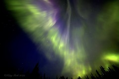 Angel In The Sky (Katy on the Tundra) Tags: northernlights purpleaurora auroraborealis phoenixaurora angelaurora