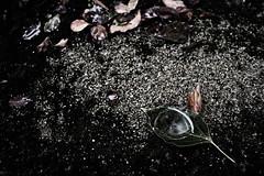 in the rain (Sat Sue) Tags: olympus micro four thirds 43 penf japan fukuoka leaf fallen