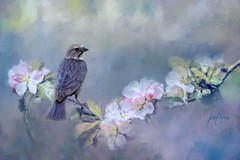 Bird on a branch of flowers...(Explored) (Patlees) Tags: bird flowers texture dt nc explored frontpage ttt