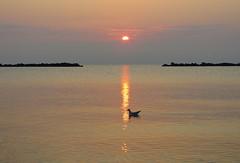 IMG_0024x (gzammarchi) Tags: italia paesaggio natura mare ravenna lidoadriano alba sole nuvola riflesso animale uccello