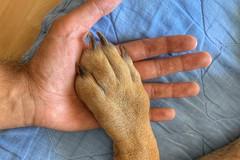 A man and his best friend #dogs #pitbulls #doggo (petartrajkov) Tags: dogs pitbulls doggo