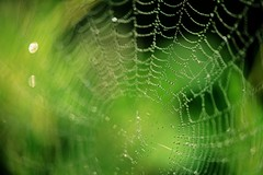 Spiderweb (~ Jessy S ~) Tags: nikon d750 nikonμd750 nikkor 105mm macro 28 macrophotography photos drops drop droplet droplets beads rains water eau gouttes pluie spiderweb toile spider pattern