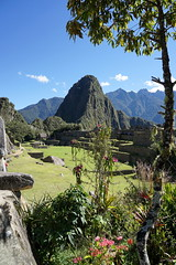 Flowers for the Huayna Picchu (Chemose) Tags: sony ilce7m2 alpha7ii mai may pérou peru machupicchu landscape paysage montagne mountain cité city architecture huaynapicchu andes fleur flower