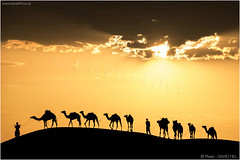 Desert Convoy (channel packet) Tags: mauritania camels desert sunset clouds silhouette light davidhill