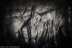 J'ai rencontré cette chauve souris à tête de Vulve, digne d'H.P. LOVECRAFT. (Pascal Rey Photographies) Tags: lesgrottesdesoyons soyons ardéche auvergnerhônealpes france néanderthal sitepréhistorique grottes concrétionscalcaires pascalrey nikon d700 luminar3 skylum aurorahdr photographiecontemporaine photos photographie photography photograffik photographiedigitale photographienumérique photographierurale pascalreyphotographies