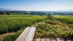 Mirador (SantiMB.Photos) Tags: 2blog 2tumblr 2ig gallecs mollet vallèsoriental vallès primavera spring campos fields paisaje landscape geo:lat=4155113700 geo:lon=219345700 geotagged molletdelvalles cataluna españa
