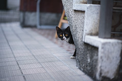 猫 (fumi*23) Tags: ilce7rm3 sony street sel85f18 85mm fe85mmf18 a7r3 animal alley cat chat gato neko bokeh emount ねこ 猫 ソニー