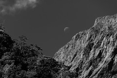 Seduced by the noise and the bright things that glisten (.KiLTЯo.) Tags: kiltro nz newzealand milfordsound southland landscape mountain cloud moon nature trees forest rock