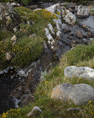 bog plants, stream and rocks (Wendy:) Tags: connemara ireland west bog plants stream rocks