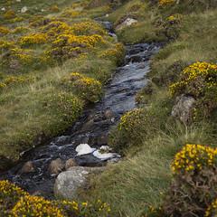mountain stream (Wendy:) Tags: connemara ireland west gorse stream
