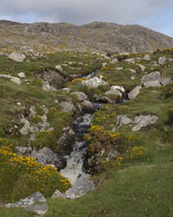 (Wendy:) Tags: connemara ireland west stream gorse rocks