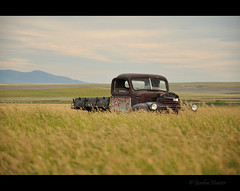 while the clock goes tick tock, tick tock (Gordon Hunter) Tags: gmc gm chevy truck old abandoned decay rust field crop grass calm soft hill view prairies auto car vehicle country rural ab canada gordon hunter nikon d5000