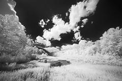 Late Summer on the Cheat (DRCPhoto) Tags: irconverteddslr canon5d digitalinfrared digitalir sigma1224mmdghsm cheatriver westvirginia