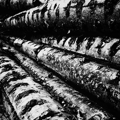 Logs (Ruud Otter) Tags: iphone pine abstract forest wood log