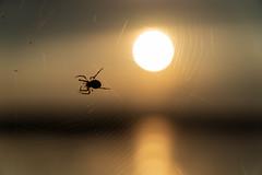 Spinne im Abendlicht (Tim Refert) Tags: spinne sonne sun spider