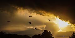 Golden hour (AJ Muñoz Foto) Tags: goldenhour golden mountain birds coatepec veracruz landscape sunset clouds montaña aves atardecer horadorada nubes
