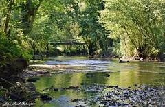Nature - Le Stangala   Bretagne (jean-paul Falempin) Tags: vallée rivière bois stangala rusruisseaurivière couleurs reflets nature finistère bretagnebrittany