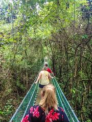 Roatan-Ecowalk-Bridge2B (lelizard) Tags: cruise ncl breakaway westerncaribbean roatan honduras port ecowalk suspension bridges nature