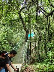 Roatan-Ecowalk-Bridge5 (lelizard) Tags: cruise ncl breakaway westerncaribbean roatan honduras port ecowalk suspension bridges nature