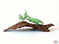 Mantis by Kamiya satoshi (yoan.remy) Tags: origami mantis mantereligieuse kamiyasatoshi