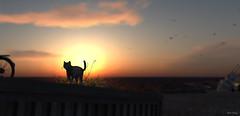 roam (Mara Telling:) Tags: sl secondlife cat roam stray pets sunset vuk