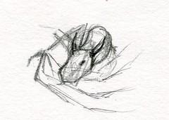 sc0675 (Josh Beck 77) Tags: traditional traditionalart pencil fantasy fantasycreature dragon drawing sketch