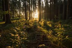 Forest lightplay (Sebo23) Tags: light nature forest landscape licht grün landschaft wald sonnenstrahlen naturaufnahme lichtstimmung canon16354l canoneosr