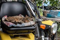 Biker Cat (wb.fotografie) Tags: motorrad katze pause bike cat break schweiz heiden ausserrhoden kantonappenzell bodensee