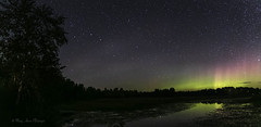 Rush Lake Aurora (maryanne.pfitz) Tags: landscape nightscape lake water woods birchtree nature summer auroraborealis rushlake boulderjunction wisconsin vilascounty maprushlk161617 panorama maryannepfitzinger