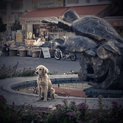 If you get lost... meet me at the fountain (chris.angel1) Tags: fountain waiting dog fauithful loyal retriever goldenretriever