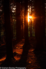 Sunset in Sulham woods (Graham Bowley) Tags: sunset summer sulhamwoods landscape evening berkshire reading